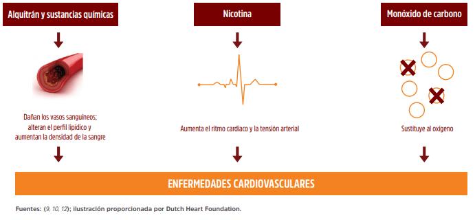 Mecanismos fisiopatológicos del consumo de tabaco que causan enfermedades cardiovasculares